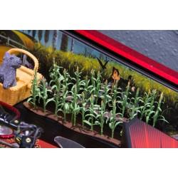 Wizard of Oz Corn Stalk Field Rows